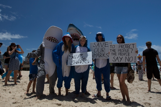 Shark supporters
